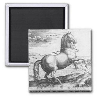 Equus Hispanus Imanes De Nevera