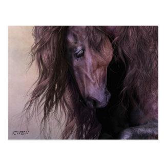 Equus Postcard