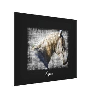 Equus White Horse Portrait Canvas Print