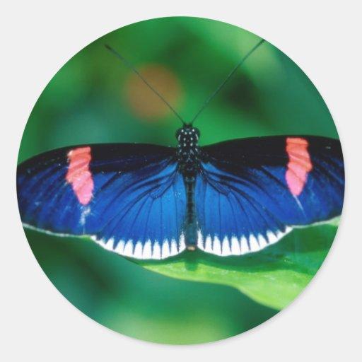 erato del heliconius de las mariposas pegatina redonda