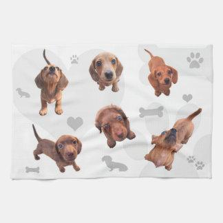 Eridox red chocolate dachshund dapple puppies towel