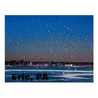 Erie, PA skyline Postcard