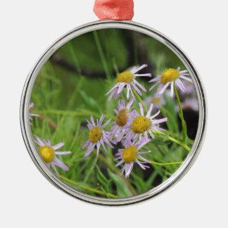 Erigeron del wildflower de la margarita de adorno redondo plateado