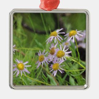 Erigeron del wildflower de la margarita de adorno cuadrado plateado
