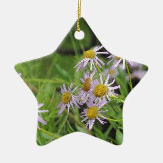 Erigeron del wildflower de la margarita de adorno de cerámica en forma de estrella