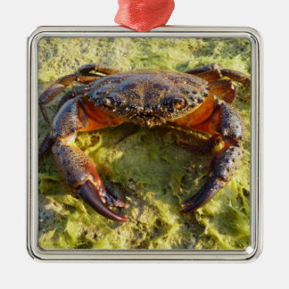 Eriphia verrucosa square metal christmas ornament