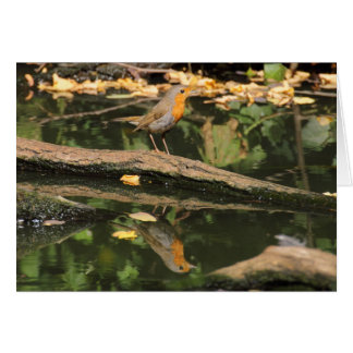 Erithacus rubecula stationery note card