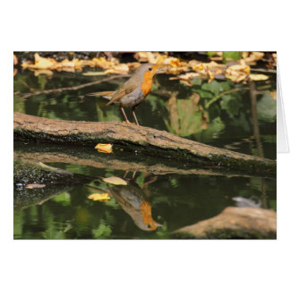 Erithacus rubecula greeting card