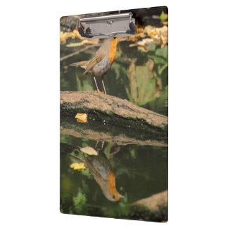 Erithacus rubecula clipboard