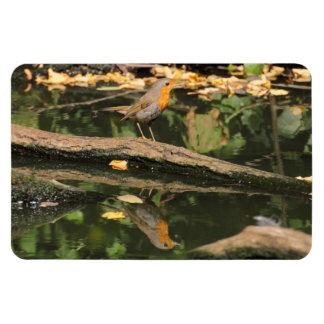 Erithacus rubecula rectangular photo magnet