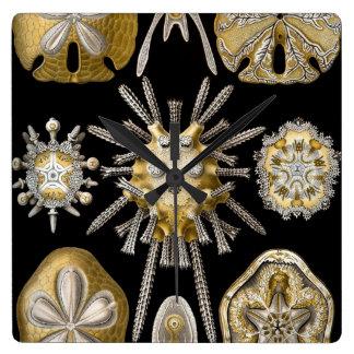 Erizos de mar de los dólares de arena del vintage reloj cuadrado