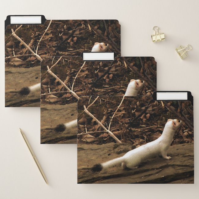 Ermine File Folder Set