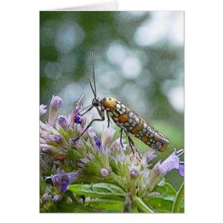 Ermine Moth on Agastache Card