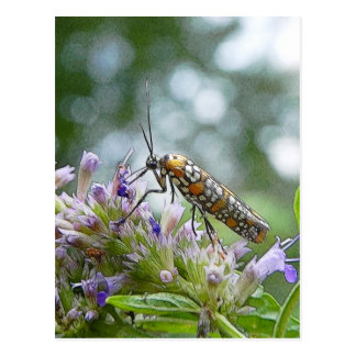 Ermine Moth on Agastache Post Card