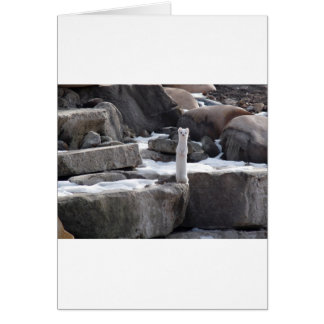 Ermine On Snowy Rocks Card