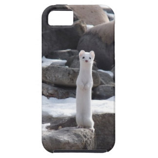 Ermine On Snowy Rocks iPhone 5 Covers
