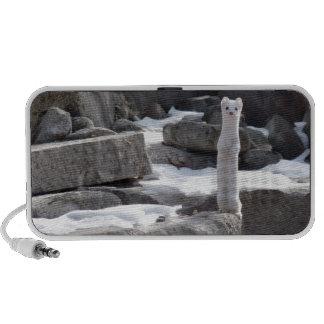 Ermine On Snowy Rocks Travel Speaker