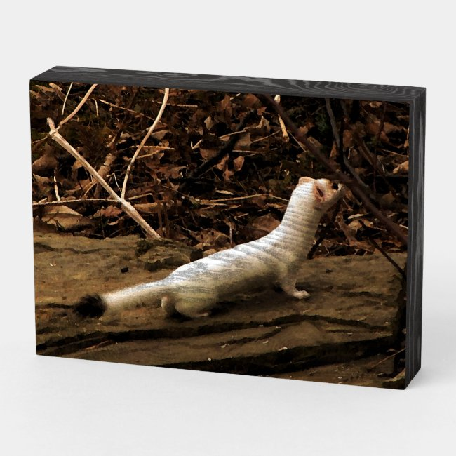 Ermine Weasel Wooden Box Sign