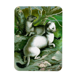 Ermines on Rocks Vintage Natural History Magnet
