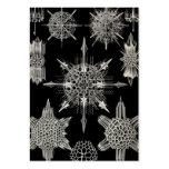 Ernst Haeckel | Acanthophracta Large Business Card