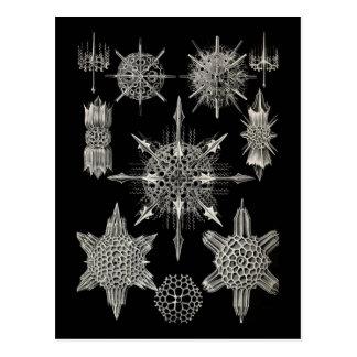 Ernst Haeckel   Acanthophracta Postcard