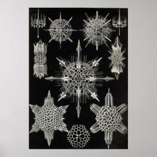 Ernst Haeckel - Acanthophracta Poster