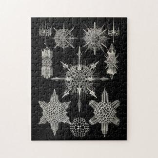 Ernst Haeckel | Acanthophracta Jigsaw Puzzles
