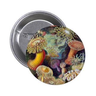 Ernst Haeckel - Actiniae 2 Inch Round Button