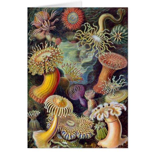 Ernst Haeckel - Actiniae Card