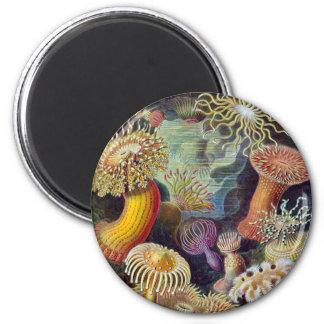 Ernst Haeckel - Actiniae Imán Redondo 5 Cm