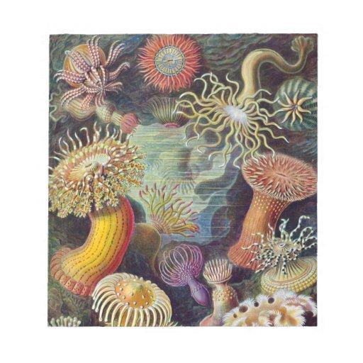 Ernst Haeckel - Actiniae Note Pads