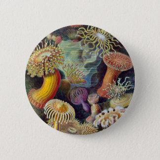 Ernst Haeckel - Actiniae Pinback Button