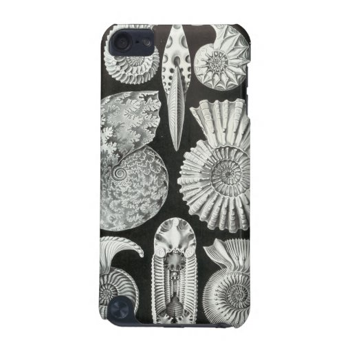 Ernst Haeckel - Ammonitida iPod Touch (5th Generation) Covers