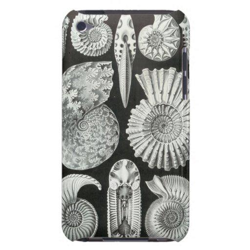 Ernst Haeckel - Ammonitida iPod Touch Cases