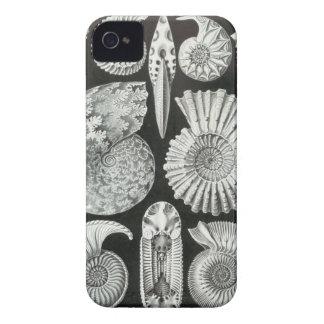 Ernst Haeckel - Ammonitida iPhone 4 Protectores