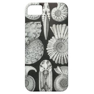 Ernst Haeckel - Ammonitida iPhone 5 Funda