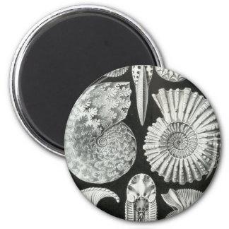 Ernst Haeckel - Ammonitida Imán Redondo 5 Cm