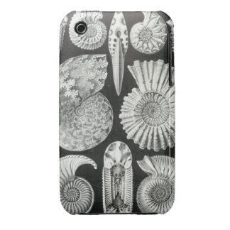 Ernst Haeckel - Ammonitida iPhone 3 Case