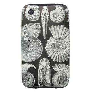 Ernst Haeckel - Ammonitida iPhone 3 Tough Cover