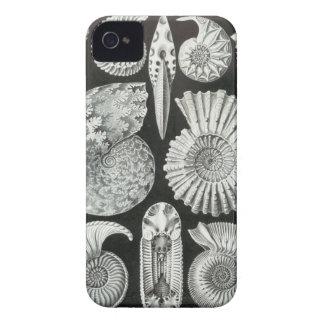 Ernst Haeckel - Ammonitida iPhone 4 Case-Mate Case