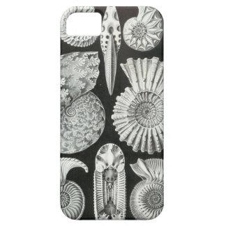 Ernst Haeckel - Ammonitida iPhone SE/5/5s Case