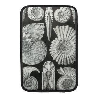 Ernst Haeckel - Ammonitida MacBook Sleeve