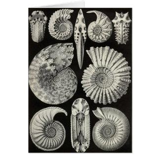 Ernst Haeckel - Ammonitida Tarjeta De Felicitación