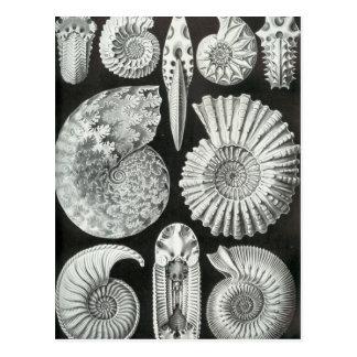 Ernst Haeckel - Ammonitida Tarjetas Postales