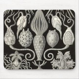 Ernst Haeckel - Amphoridea Detail1 Mouse Pad