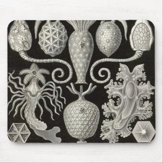 Ernst Haeckel - Amphoridea Detail2 Mouse Pad