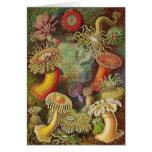 Ernst Haeckel - anémonas de Actiniae Felicitaciones