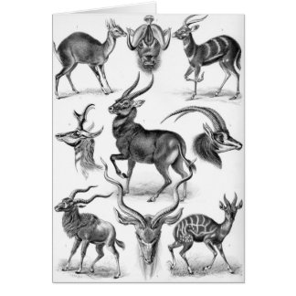 Ernst Haeckel - Antilopina Card