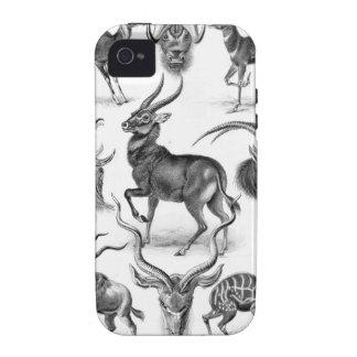 Ernst Haeckel - Antilopina Case-Mate iPhone 4 Case