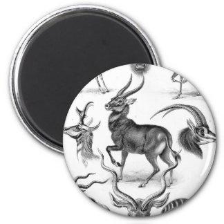 Ernst Haeckel - Antilopina Imán Redondo 5 Cm